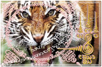 Invincible comme un tigre